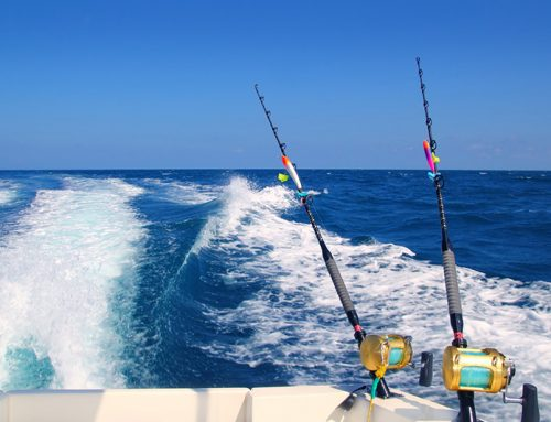 Night fishing with willfish charters willfish gold for Gold coast fishing charters