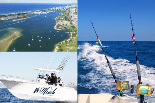willfish custom tours gold coast