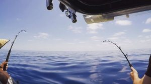 Marlin Fishing Whitsundays